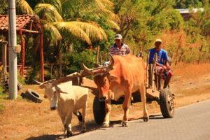Dag 6 Ometepe Excursie Around The World Travel