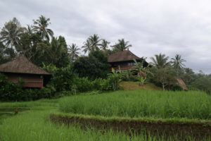 Day 1 Bali Eco Stay Around The World Travel