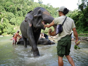 Day 3. Tangkahan, elephant washing Around The World Travel