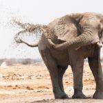 Botswana Reis op maat - Around the World Travel