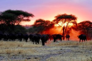 Tanzania - Around The World Travel