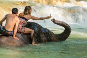 Dag 10 olifanten wassen in Laos - Around The World Travel
