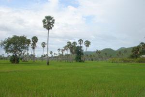 Dag 4 Cambodja ATWT