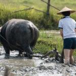 Rondreis Laos - Around The World Travel