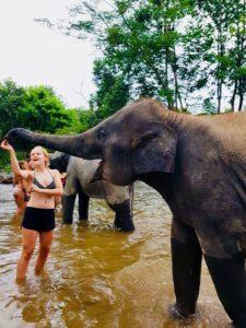 Olifanten wassen Thailand