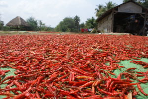 Peppers in Cambodja Around The World Travel