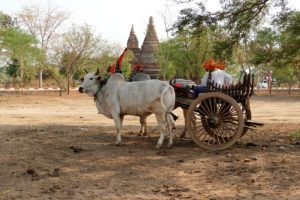Dag 6 Bagan tour - Myanmar Around The World Travel