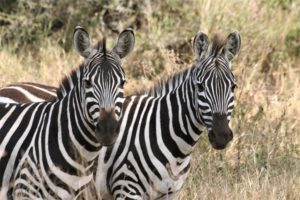 Reis 1 dag 7 Ngorongoro Tanzania Around The World Travel