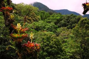 Panama Bocas del Toro | Around The World Travel