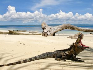 Iguana / Isla Iguana, Panamá Around The World Travel