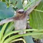Panama reis op maat - Around The World Travel - 14