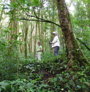 jungle trek Panama Around The World Travel