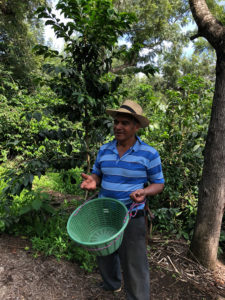 rondreis Guatemala - Around The World Travel - coffee_tour_1
