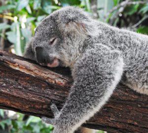 Australie reis op maat Around The World Travel The World Travel
