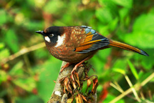 Chitwan Jungle safari - Around The World Travel