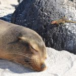 rondreis galapagos Around The World Travel