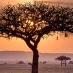 Afrika rondreizen banner Around The World Travel