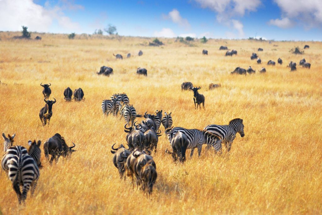 Dag 7 - Locatie - Serengeti | rondreis Tanzania - Around The World Travel