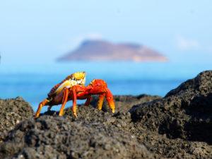 Day 16 - Crab on Galapagos - bijzondere Rondreis Ecuador - around the world travel