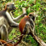Dag 8 strandvakantie zanzibar jozani forest around the world travel