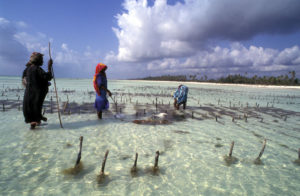 seaweed_farming-zanzibar around the world travel