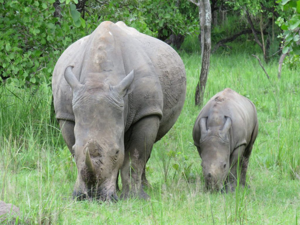 Uganda Ziwa Rhino - rondreis Oeganda Around The World Travel