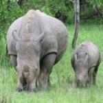 Uganda Ziwa Rhino - rondreis Oeganda Around The World Travel