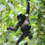 Uganda apen - rondreis Oeganda Around The World Travel