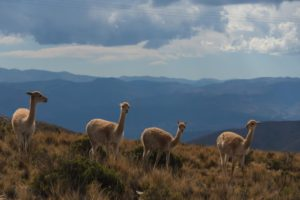 4 rondreis argentinie patagonie - around the world travel