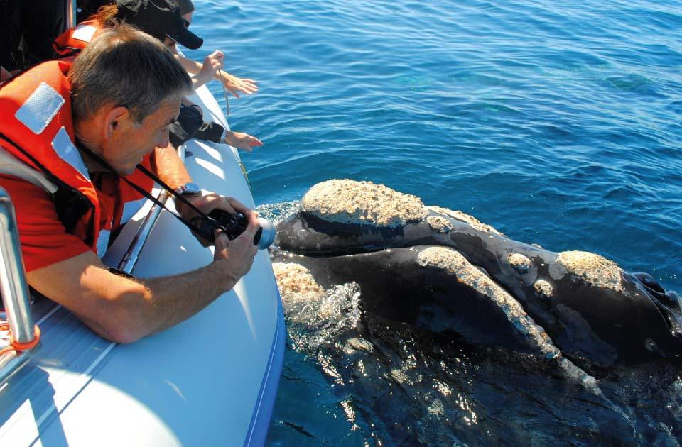 05 Península Valdés 4x4 Adventure met trekking tussen de pinguïns en boottocht walvissen spotten | Patagonie rondreis argentinie - Around The World Travel